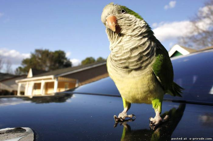 Beautiful Parrot Photo Wallapaper Parrots pictures and wallpaper.